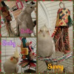 Bella Sunny and Baby with their new toys x 500