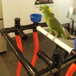Zoey on his Sr. Playgym 1