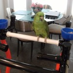 Zoey on his Sr. Playgym 2
