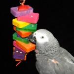 dengan bulu hingga 2015 x 500 touchscreen, Jerry Jr, burung whirly