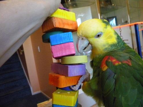 Kiwi fro Blog