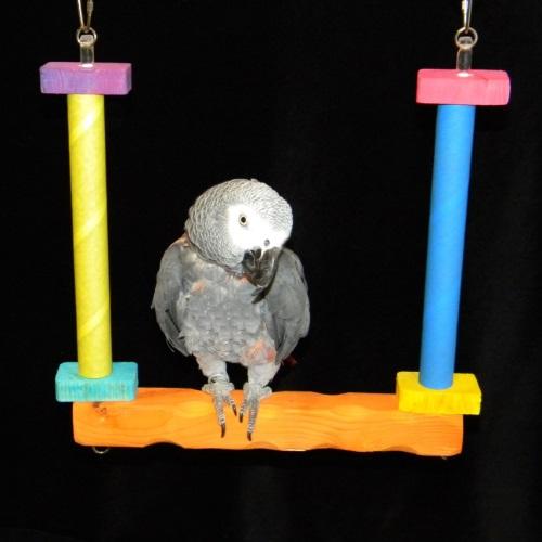 Birdie Bagel Swing